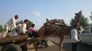 gekochte kameel